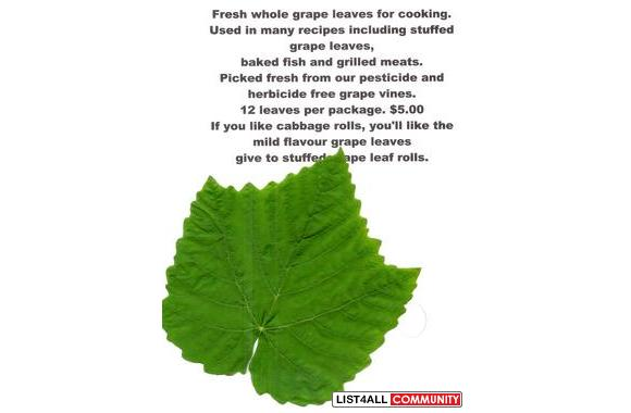 GRAPE LEAVES & VINES - seasonalGRAPE LEAVES & VINES - seasonal